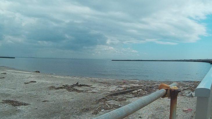 千葉市 検見川の浜で、初めての投網、スズキの子をゲット!