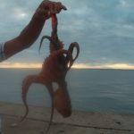 旭市 飯岡大堤防で投網、サビキ釣り、そしてマダコをゲット!