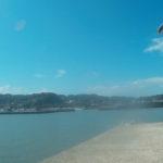 いすみ市 千葉県で野生のウミガメがみられる漁港!
