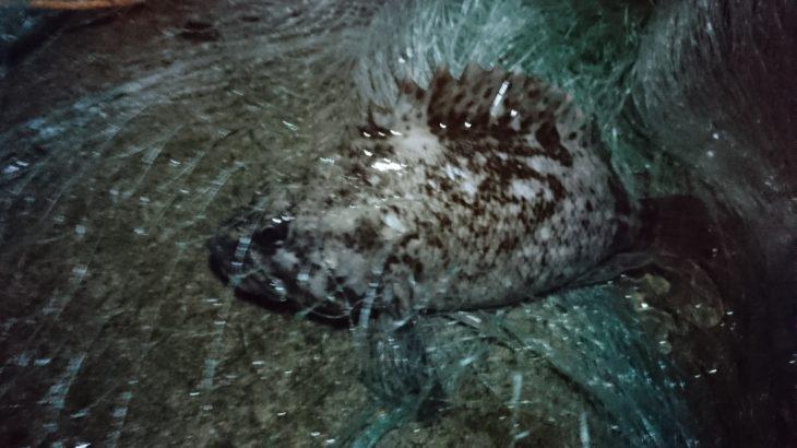 イシモチ、ムラソイ、タケノコメバル、舌平目に釣りで小ダコまで、久しぶりに満足のいく獲物。