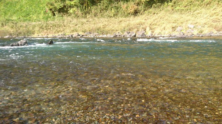 那珂川に、鮭の遡上を見に行きました!