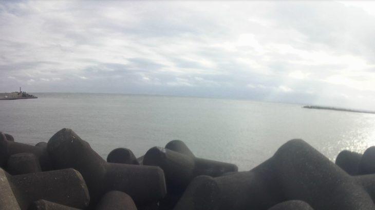 片貝港をぶらり、湾にはイルカ、海の駅にはウミガメが!